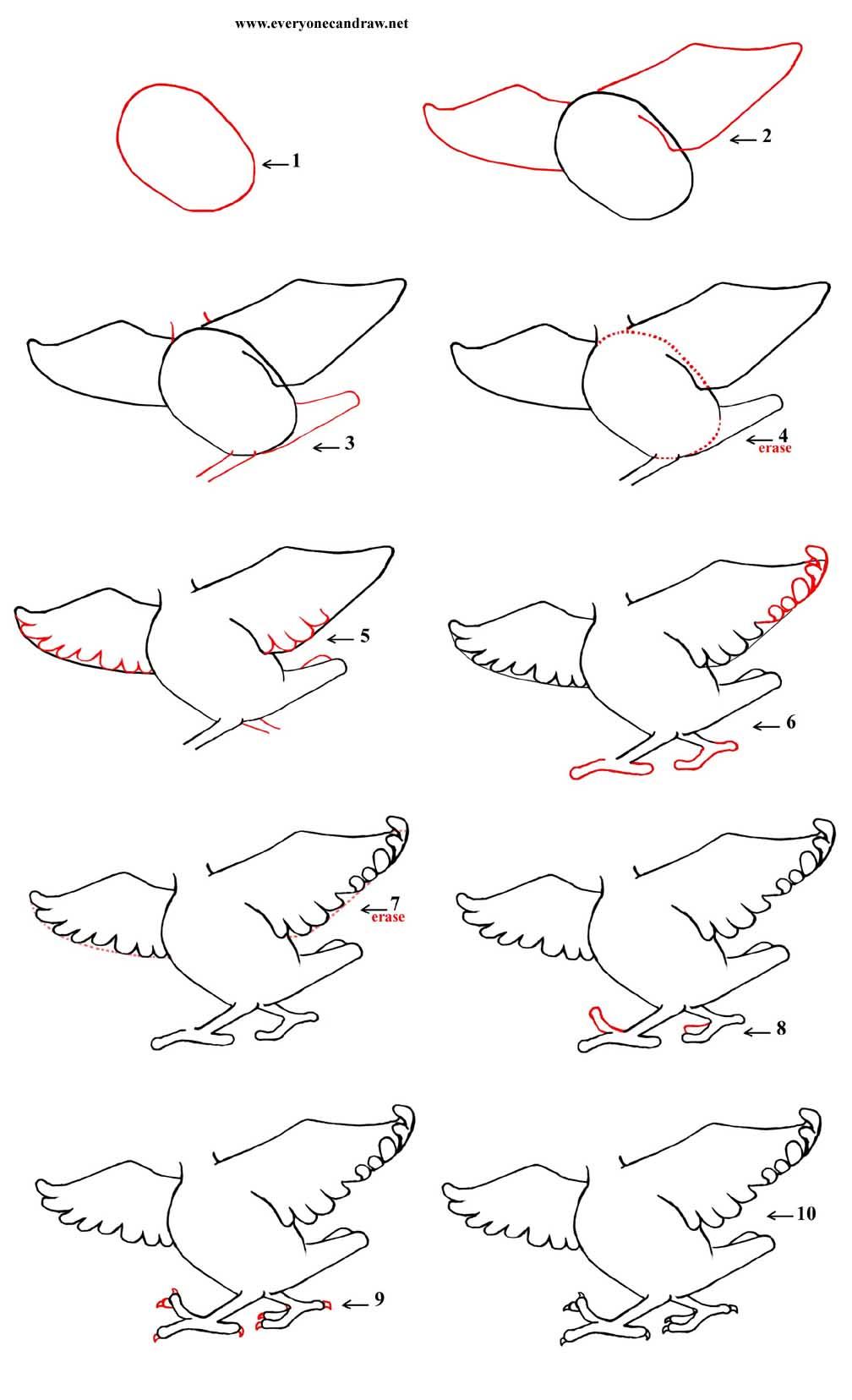 Cartoon Bird S Body Step By Step Number 5