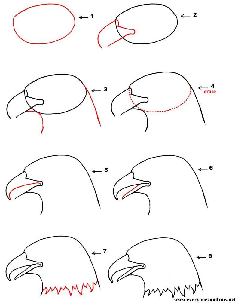 Cartoon Bird Head Step By Step Number 13