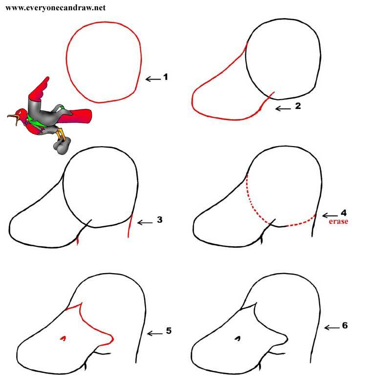 Cartoon Bird Head Step By Step Number 16