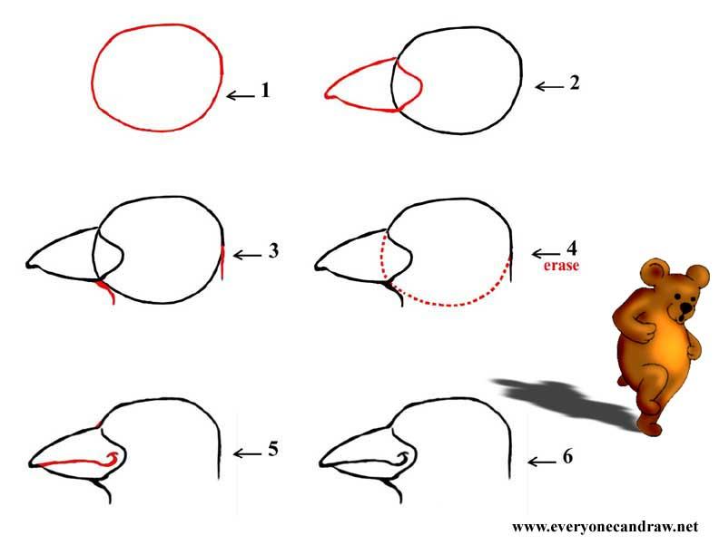 Cartoon Bird Head Step By Step Number 2