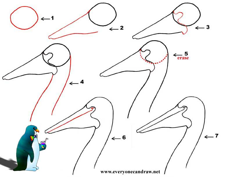 Cartoon Bird Head Step By Step Number 7